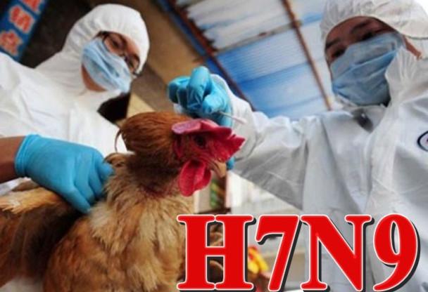 大陸年底暴增H7N9禽流感 確診106宗20人死
