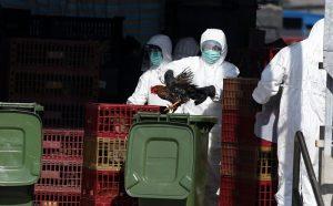 H7N9來襲!繼香港4人後 澳門老婦確診