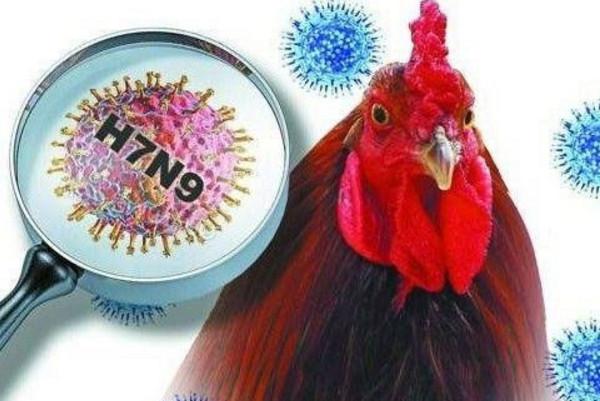 湖南漢接觸禽類 感染H7N9病危