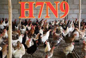 湖北男染H7N9禽流感  曾出没活禽市场