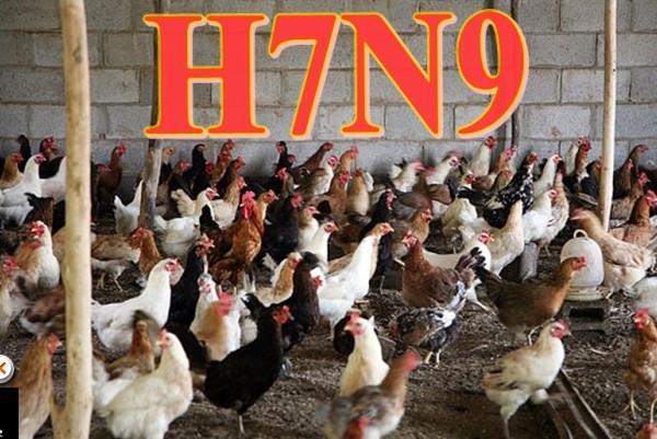 湖北男染H7N9禽流感  曾出沒活禽市場