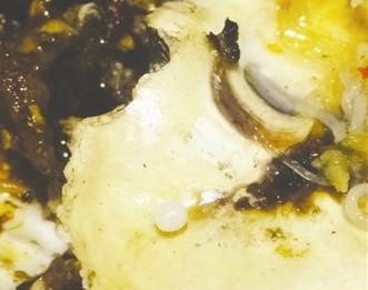 生蚝中吃出珍珠 成都食客准备拿它做戒指