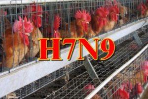 廣東今年新增11人染H7N9禽流感 已2人死亡