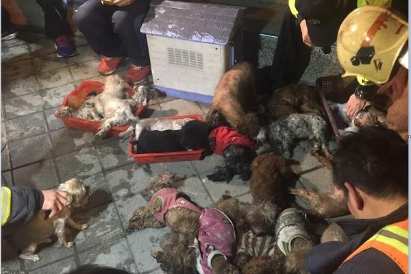 新北市宠物店失火 警消人工呼吸救回小狗