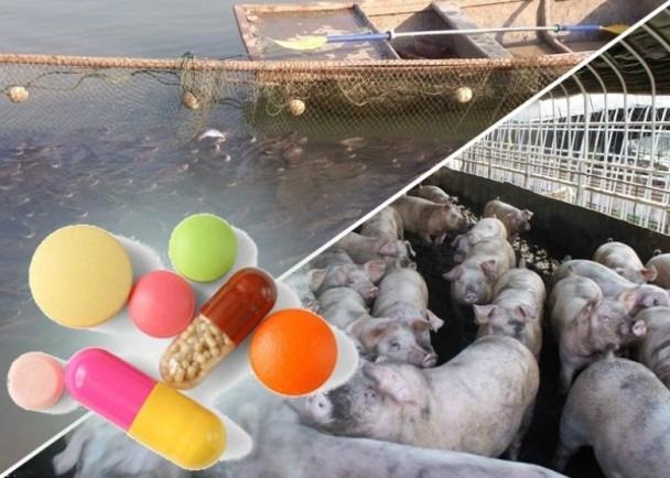 外媒:大陸濫用抗生素 人畜通吃