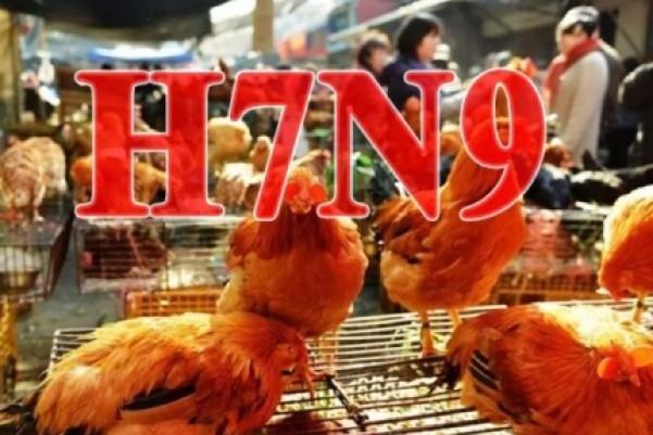 H7N9禽流感辽宁新增2人感染 湖北山东增3人