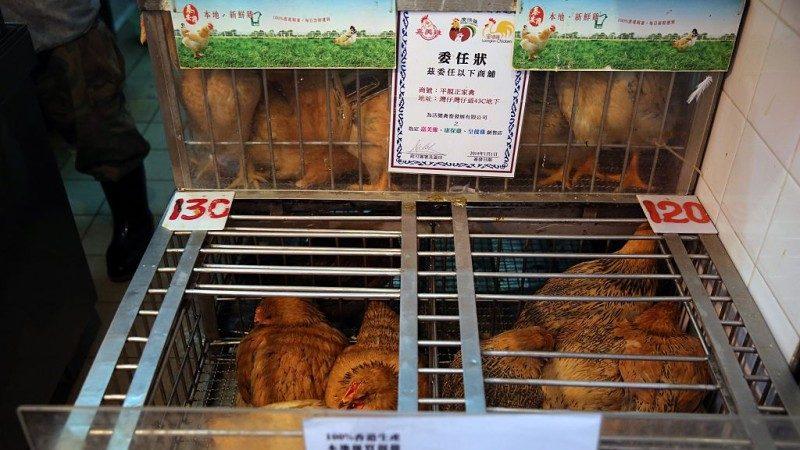中国H7N9疫情攀升 医生:勿接触禽鸟 鸡蛋要煮熟