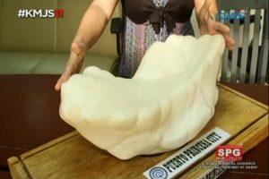 稀世珍寶!全球最大天然珍珠重34公斤,被放床底10多年
