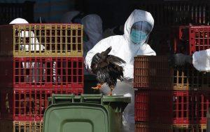 中国大陆H7N9禽流感爆发  20天内24死