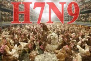 郑州4日两例H7N9禽流感 两中年男子病危