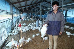 台南火鸡暴毙确诊感染H5N6 花县水陆禽21日前禁运