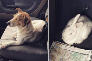 小狗在路邊等候 帶善心路人救兔子朋友