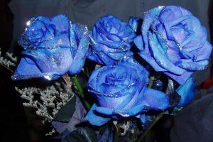 """情人节大陆流行""""蓝色妖姬""""染色玫瑰有损健康"""