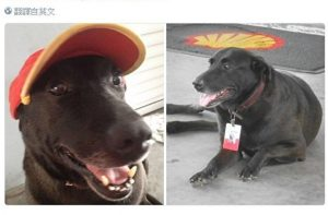 巴西遭棄養小狗 在加油站找到全職工作