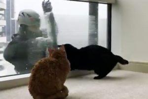 高層公寓窗外突然來了不速客,於是兩隻貓咪遭到了如此待遇
