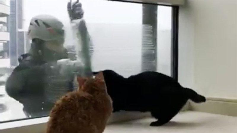 高层公寓窗外突然来了不速客,于是两只猫咪遭到了如此待遇