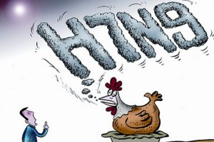 H7N9爆發 大陸7天8死69人確診