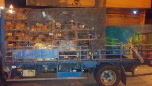 家禽批发市场出现禽流感  北市消毒净空冻体销毁