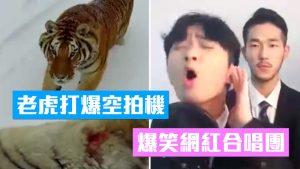 【一周热门影片】东北虎打爆空拍机、中国制无尽头泳池、超强网红歌手