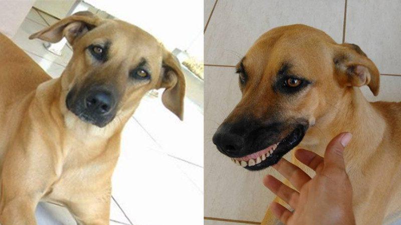 狗狗後院玩夠回家帶著詭異的笑容 主人仔細盯了半天 終於發現爆笑貓膩