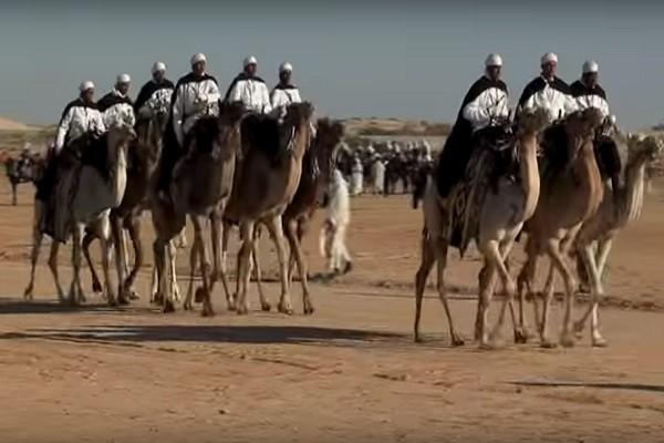 豪奢举世闻名 沙特砸800亿美元办骆驼节