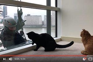好奇猫咪与伦敦洗窗工人 玩得不亦乐乎