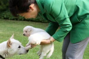 搬离青瓦台惹毛民众 朴槿惠被批狠丢9爱犬