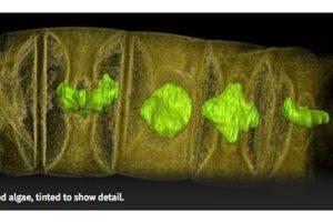 距今16亿年!印度发现最古老植物化石