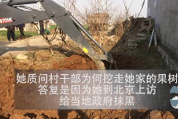安徽农民两会上访归来  六十棵果树被挖走