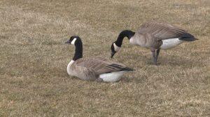 環境部:加拿大大部分地區春天「比往常要暖」