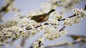 春分天地人合一 一刻值千金