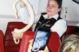 上班乘客留蛇走人 萬米高空 勇空姐徒手擒蛇