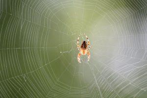 恐怖论! 蜘蛛若吃人 地球全人类年内消失