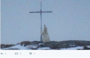 「我被震撼了」加拿大女子拍攝祈禱的北極熊