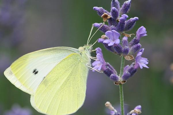 原來有這麼多植物可以驅蚊,家裡隨意放幾盆夏天沒蚊子