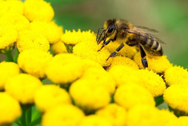 嬰兒吃蜂蜜死亡!還有這些危險食品都不能吃