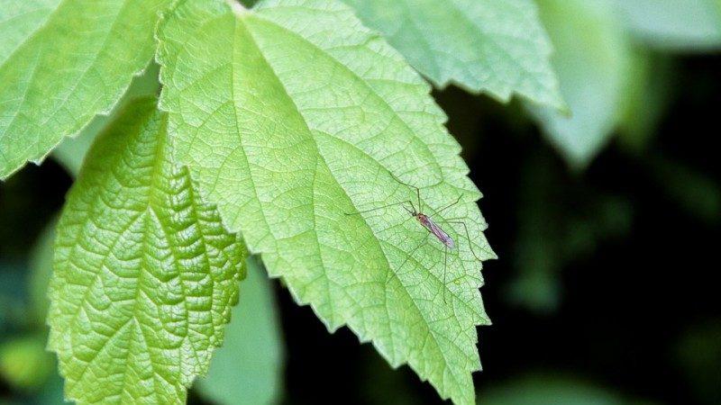 只需一滴油,就可以輕鬆杜絕蚊子騷擾!