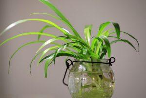 蔬菜也能簡單種「盆栽」!自己親手種的就是不一樣