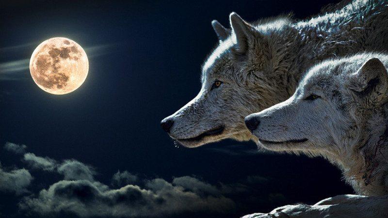 逼狼去吃草,太经典了!不只是段子