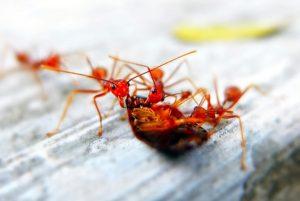 人人讨厌的这类虫子出现在家里,只要洒一点盐在角落,结果意外发生了!