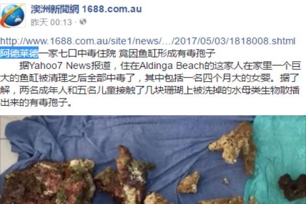 """澳洲一家7口人全部中毒 罪魁祸首居然来自鱼缸里的有毒""""孢子"""""""