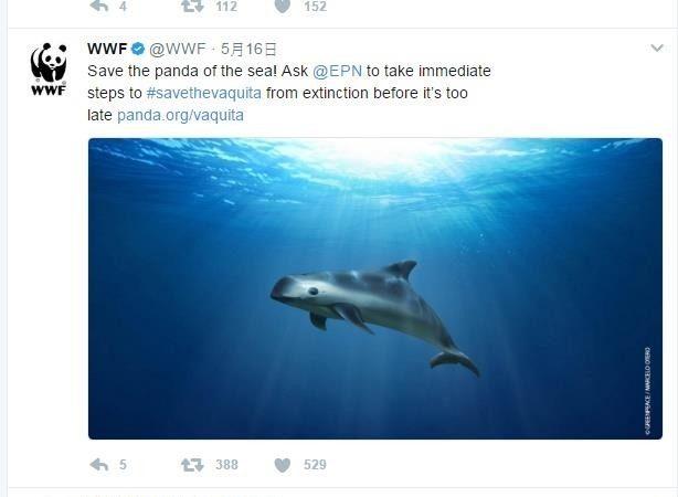 剩不到30隻 可愛小頭鼠海豚恐絕種