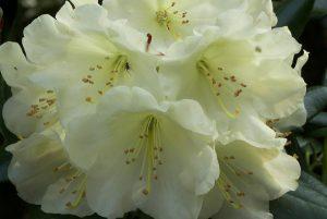 真想不到!原來這幾種花會釋放毒!家裡還在養嗎?趕緊扔了吧!