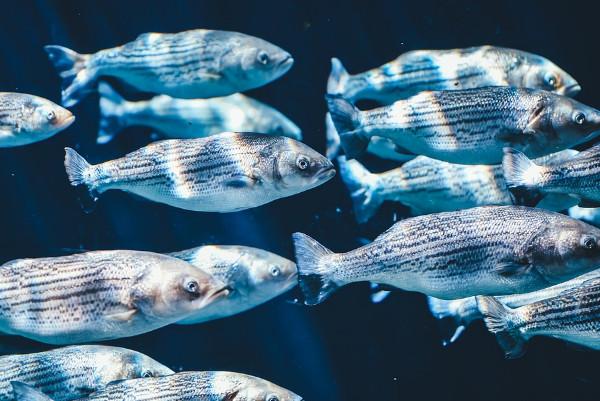 鱼贩揭秘:死而复活的鱼千万不要吃!肝肾和智力会受到严重损害