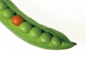 女人不當黃臉婆 要多吃兩種「豆」