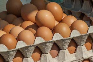 太神奇!母鸡生蛋 蛋壳的钙质竟然是这样来的