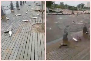 河南公園魚群亂跳 民眾驚慌疑為地震前兆(動圖)
