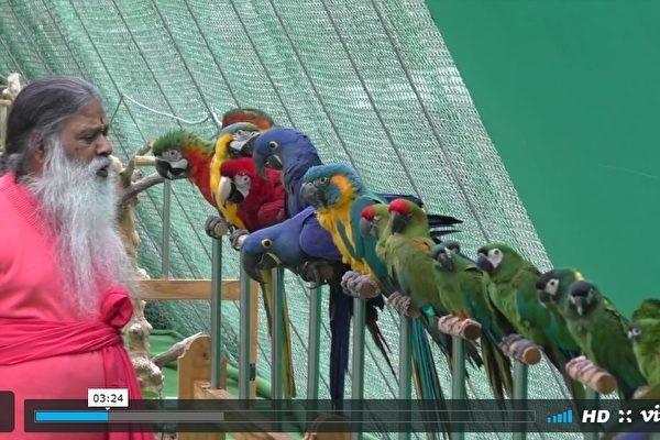 飼養468種鳥 印度男子致力拯救瀕危鳥類