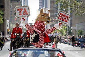 【華語直播回放】7月7日加拿大卡城牛仔節大遊行