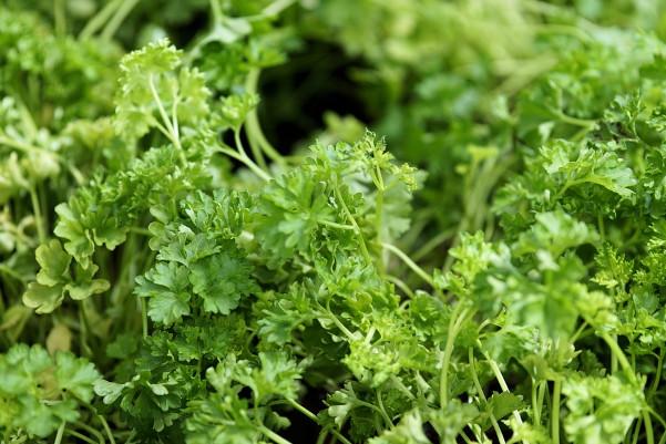 香菜、木耳不是隨便吃的,吃對了不易得心肌梗